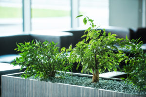 , How to design a biophilic office on a budget